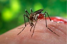 Capim Branco: Comitê define ações contra o Aedes aegypti