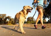 5 dicas para se exercitar com seu cão
