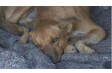 Cachorro cai na Serra Santa Helena após morder parapente e vira celebridade