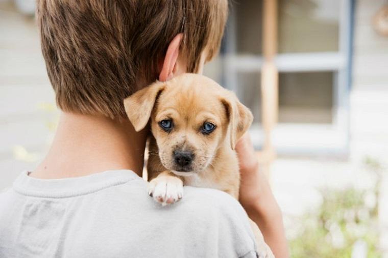 Um novo lar: prefeitura oferece para adoção animais que foram resgatados