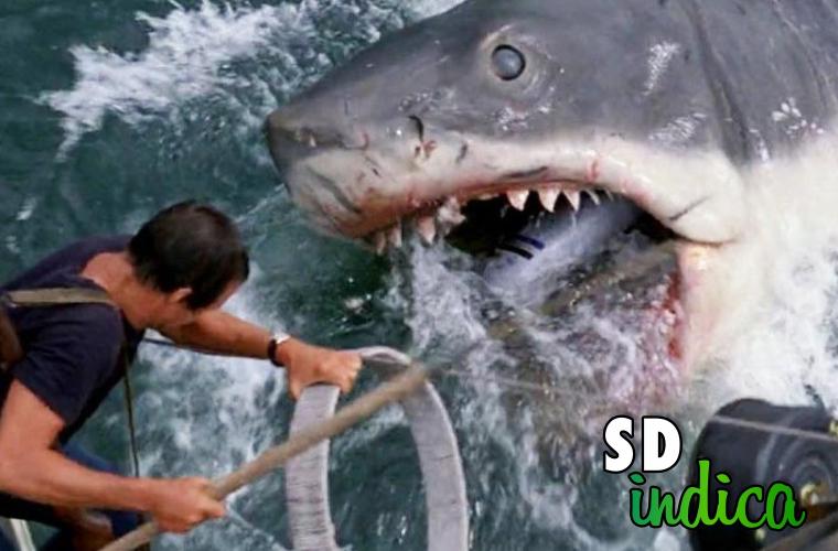 Sete Dias Indica: Tubarão