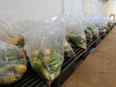 É destaque na região: doação de alimentos beneficia famílias e agricultores em Jequitibá